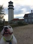 """Take one of me and the lighthouse!"" -Gordy"