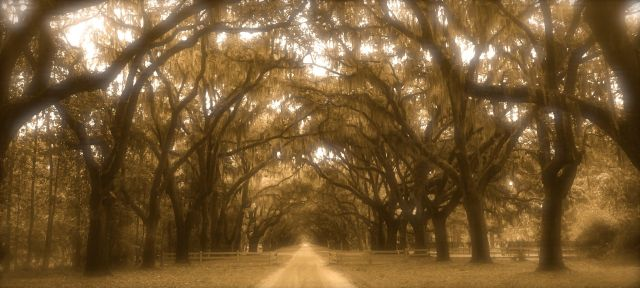 53 - Wormsloe Oaks