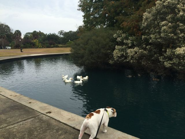 9-charleston Pond