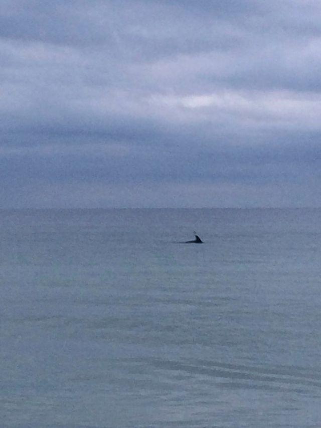 95- Lucky Dolphin